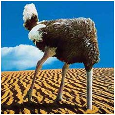A scared ostrich